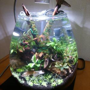 ボトルアクアリウムのリセット〜陰性水草を活かす〜