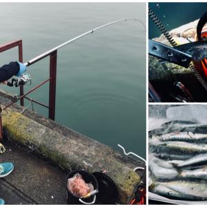 【釣り】那珂湊でサビキ釣り。サバ・サッパのフライ