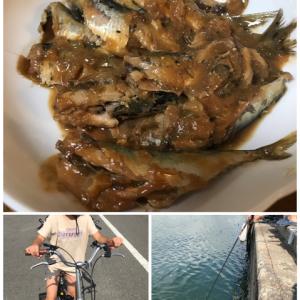 【釣り】夏の終わり/那珂湊/サビキ釣り/車中泊 マイワシがメイン?
