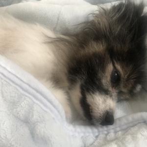15年連れ添った愛犬が亡くなり天国へ旅立ちました・・・ 手続きやイオンのペット葬について