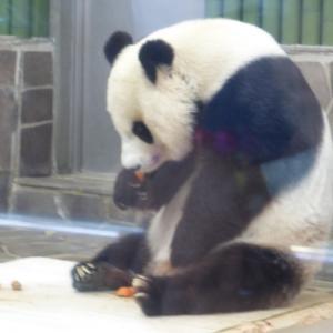 神戸市立王子動物園にも行ってみたら・・・感動(#^^#)パンダとオラウータン