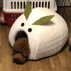 ドーム型ベッドでエアコン問題解決を狙う