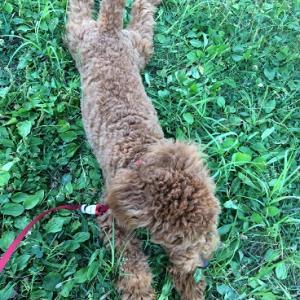 木を噛みたがる犬…