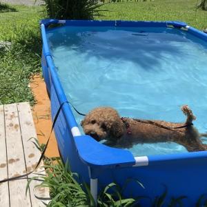 犬連れ初旅行! 白浜オーシャンリゾートの感想