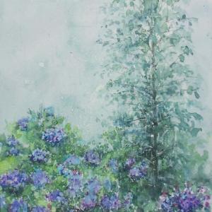 「雨降りアジサイ」