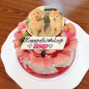 冷やしそうめん&もう一つの誕生日ケーキ