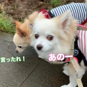 間が悪かったお散歩(T . T)