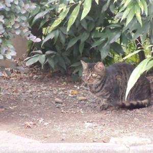 幻の猫とシンクロ猫(^^♪&ブンチョとα