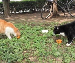猫肥ゆる秋&ちみちみブンチョ(^^♪&彼岸花。