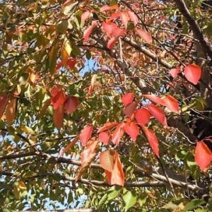 色づく秋(^^♪