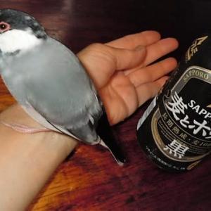お気に入りのビール(^^♪&α