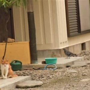 不思議な関係(^^♪&猫とブンチョと映画。