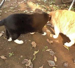 太陽を浴びる猫とブンチョ(^^♪&映画三昧。