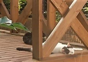 だらりん猫(^^♪&風流なブンチョ。