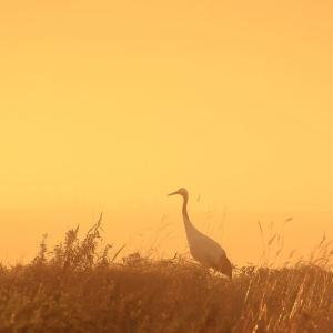湿原霧の朝に