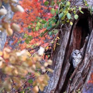 色づいた樹洞Ⅱ