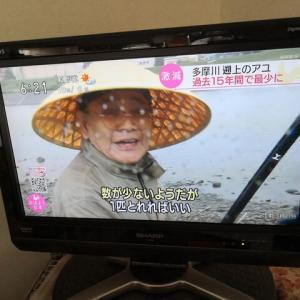 日高川には鮎が踏みつけるほどいるどー( ゚Д゚)