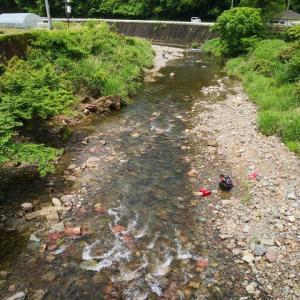 貴志川で鮎のかわりにいただいたもの(*'ω' *)