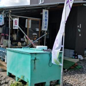 雷雨におびえた古座川探検釣行ー( ゚Д゚)