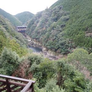 【アマゴ】日置川で勝ち越しじゃー!