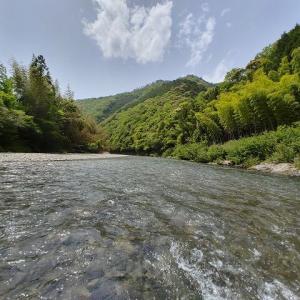 有田川ダム上ではこんなサイズの鮎が釣れている