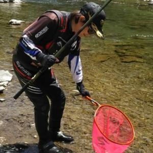ついに有田川ダム上に鮎が放流されました!