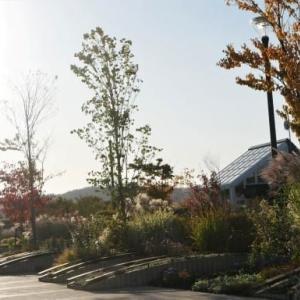 夕映えのグラスの穂の秋深し in 北彩都ガーデン