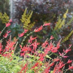 赤白黄色の花の秋