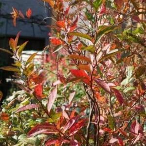 庭の草紅葉と赤い実