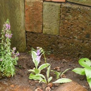 オープンスペース内の捕植とミント類の植え方