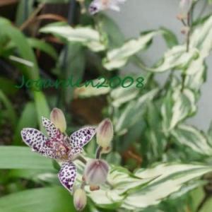なんとなく涼し気な写真でおくる旧盆の庭と「Hokkaido Gardening」のYouTube