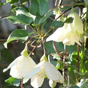 秋の庭の白い花たち