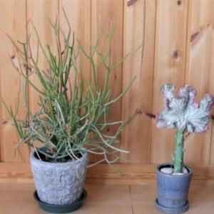 多肉植物と観葉植物を室内へ