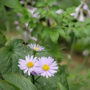 雨が降る前に咲いてきた花の写真を