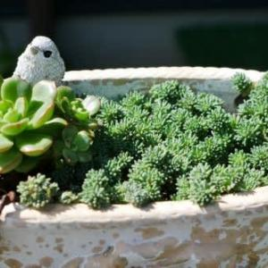 残暑厳しき中に咲く