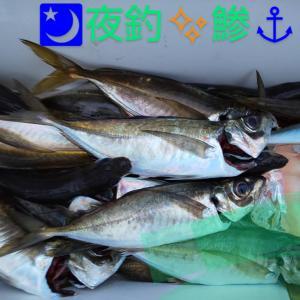 夜釣りのアジ大漁です😉👍✨
