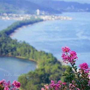 丘の上から見下ろす花