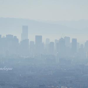朝靄に包まれた摩天楼