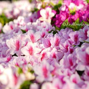 花のバトン