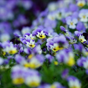 花のバトン Vol.2