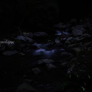 暗闇に涼しさを求めて