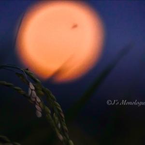月光と実りの中で