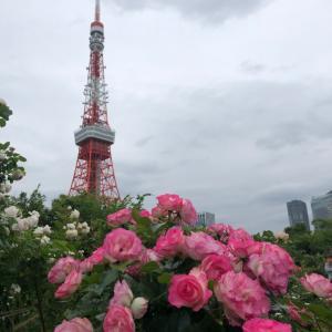 秘密の薔薇園でお散歩✨