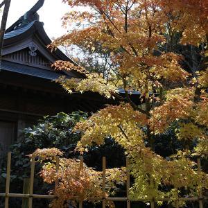 19.11.02&04:福岡の紅葉は呑山観音から4