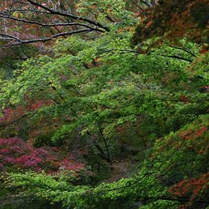 19.11.02&04:福岡の紅葉は呑山観音から6-完