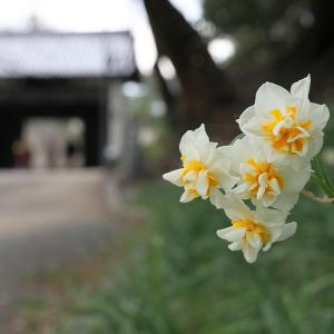 20.01.13:福岡城址のお濠と唐人町商店街3