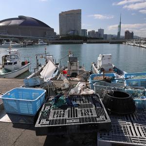 20.01.01:元日からニャンコ写真、例の漁港にて1