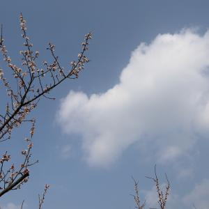 2020.02.10:早咲きの梅を求めて牛尾梅林2