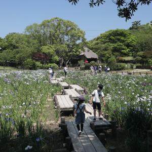 20.06.07:宮地嶽神社の花菖蒲6