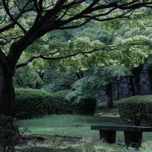 20.06.28:舞鶴公園花散策3